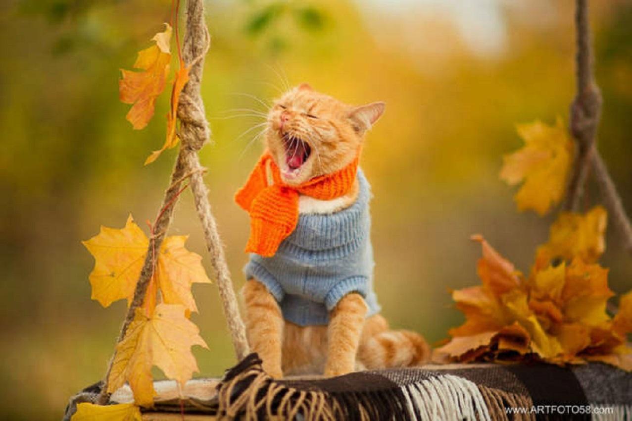 Смешная осень картинка, красивые открытки