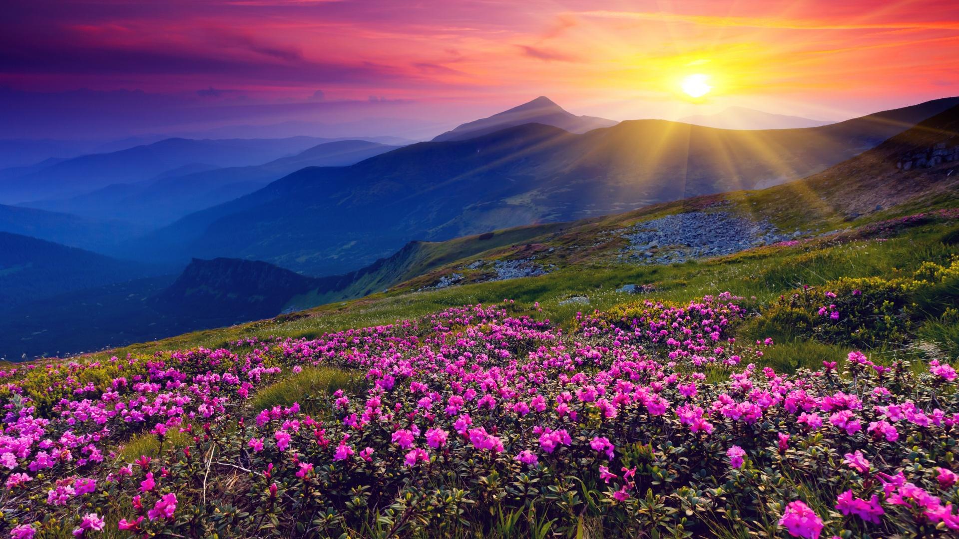 природа цветы горы nature flowers mountains без смс