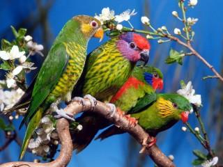 Собирать пазл 4 попугая онлайн