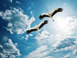 Собирать пазл Аисты в небе онлайн