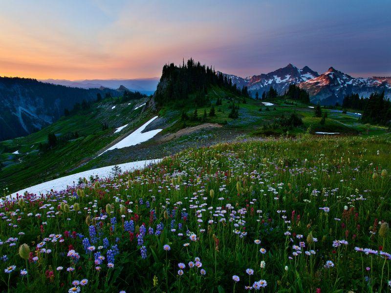 Пазл Собирать пазлы онлайн - Альпийский луг