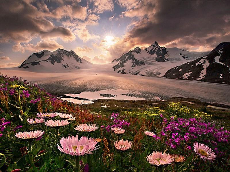 Пазл Собирать пазлы онлайн - Альпийский луг 1