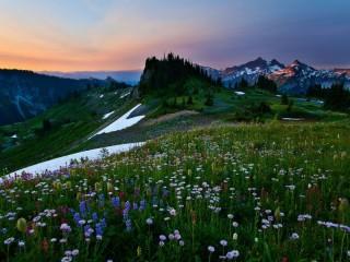 Собирать пазл Альпийский луг онлайн
