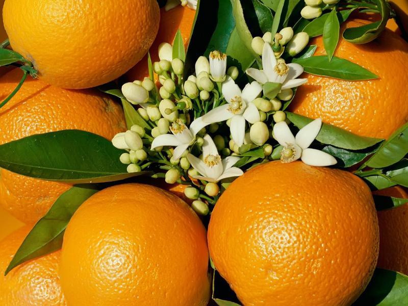 Пазл Собирать пазлы онлайн - Апельсины