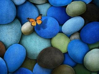 Собирать пазл Бабочка на камнях онлайн
