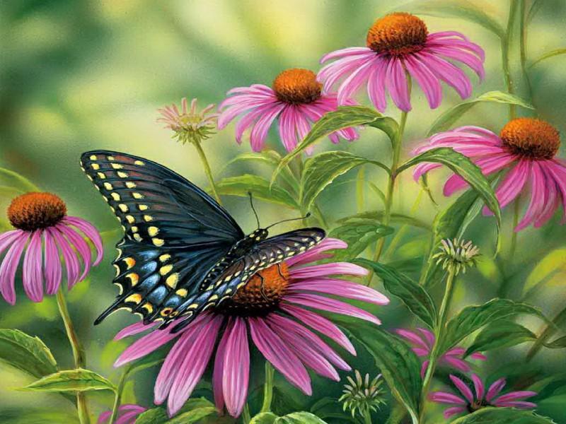 Пазл Собирать пазлы онлайн - Бабочка на цветах