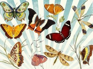 Собирать пазл Бабочки и стрекозы онлайн