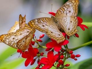 Собирать пазл Бабочки и цветы онлайн