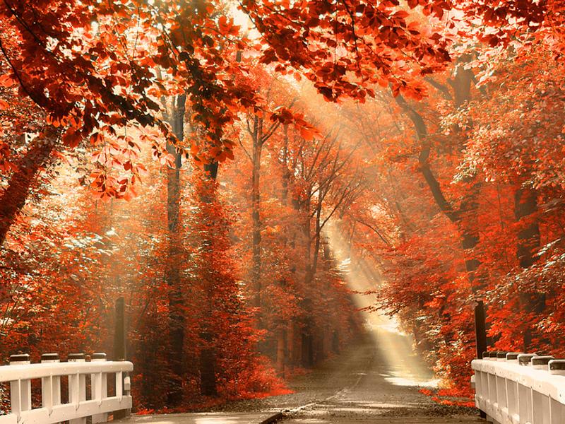 Пазл Собирать пазлы онлайн - Багряный лес