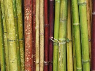 Собирать пазл Бамбук онлайн