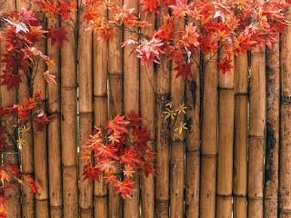 Собирать пазл Бамбуковая ограда онлайн
