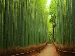 Собирать пазл Бамбуковая роща онлайн
