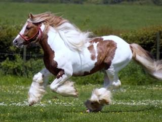 Собирать пазл Бегущая лошадь онлайн