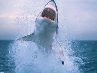 Собирать пазл Белая акула онлайн