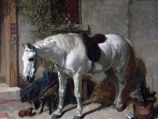 Собирать пазл Белая лошадь онлайн