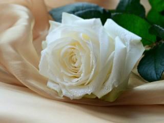 Собирать пазл Белая роза онлайн