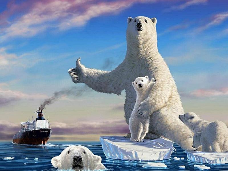 Пазл Собирать пазлы онлайн - Белые медведи