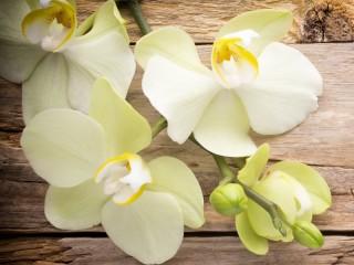 Собирать пазл Белые орхидеи онлайн