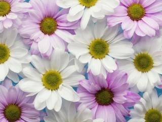 Собирать пазл Белые цветы онлайн
