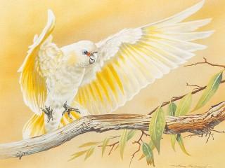 Собирать пазл Белый попугай онлайн