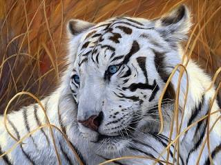 Собирать пазл Белый тигр онлайн