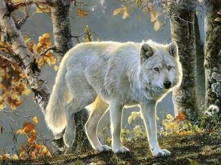 Собирать пазл Белый волк онлайн
