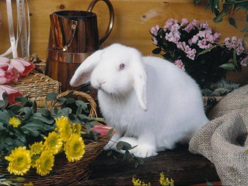 Открытка белый кролик