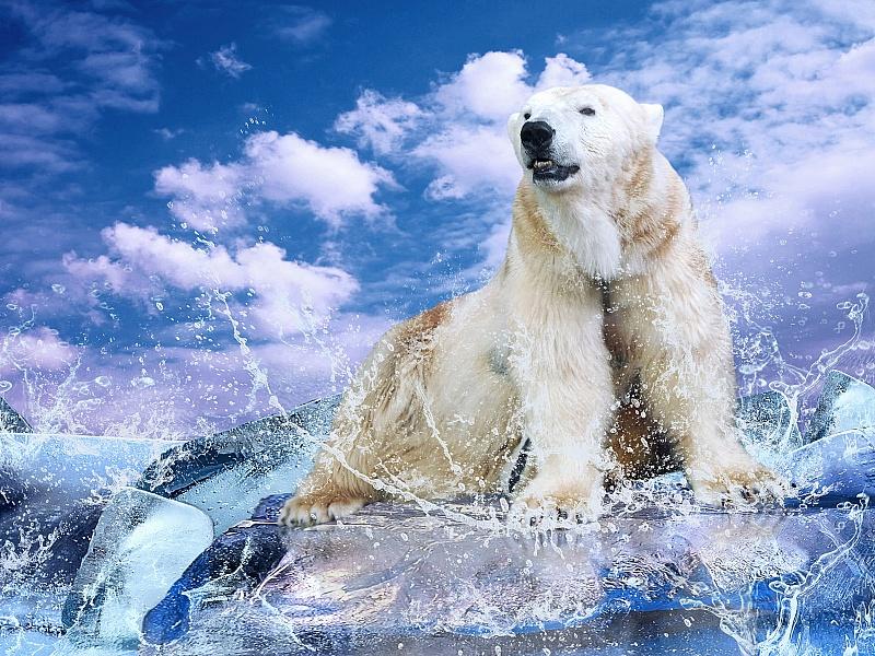 Пазл Собирать пазлы онлайн - Белый медведь