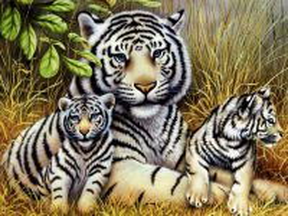 Собирать пазл Белый тигр 2 онлайн