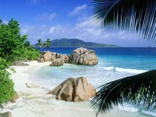 Собирать пазл Берег пальмы онлайн