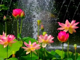 Собирать пазл Брызги водопада онлайн
