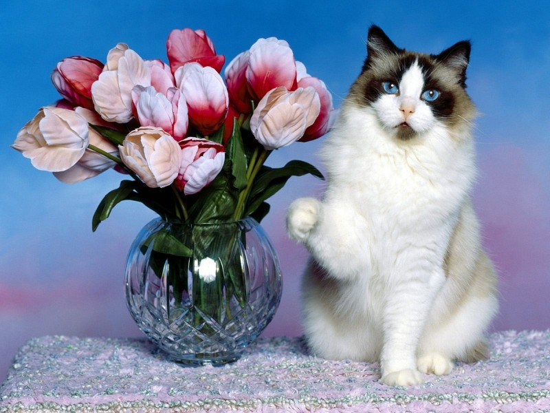 Пазл Собирать пазлы онлайн - Букет тюльпанов и кот