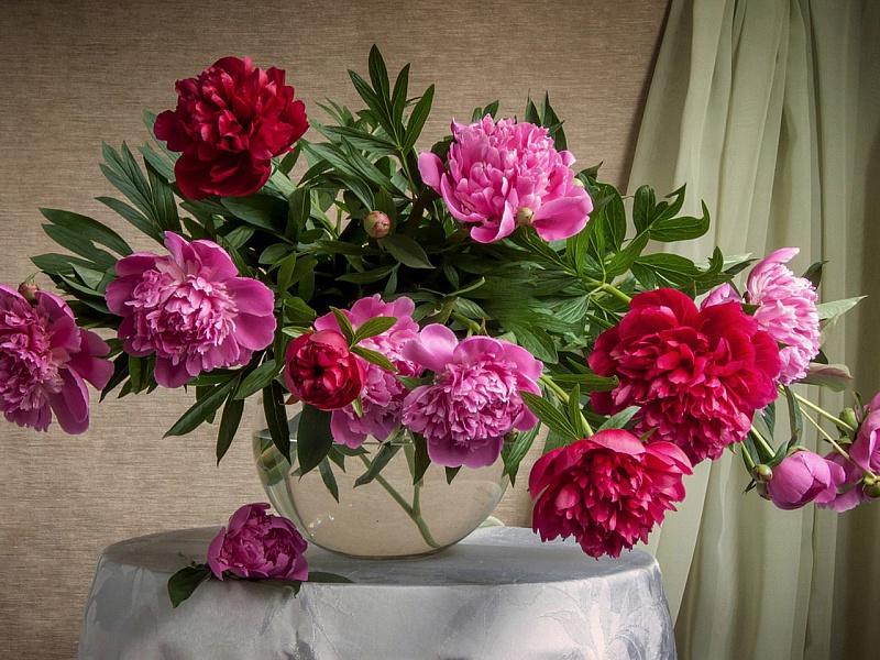 красивые фото пионов в вазе отбивные можно приготовить