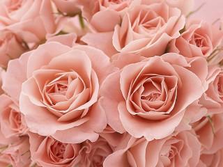 Собирать пазл Букет розовых роз онлайн