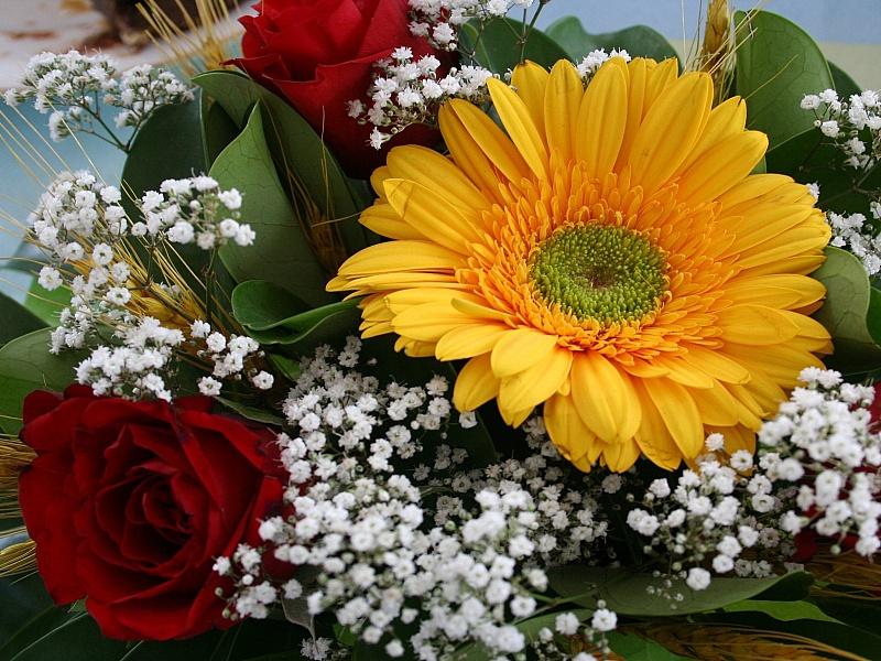 интернет-магазин фото цветы герберы с днем рождения чем