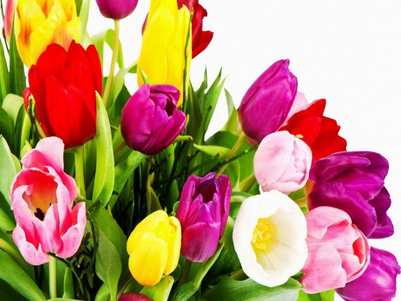 Пазл Собирать пазлы онлайн - Букет тюльпаны