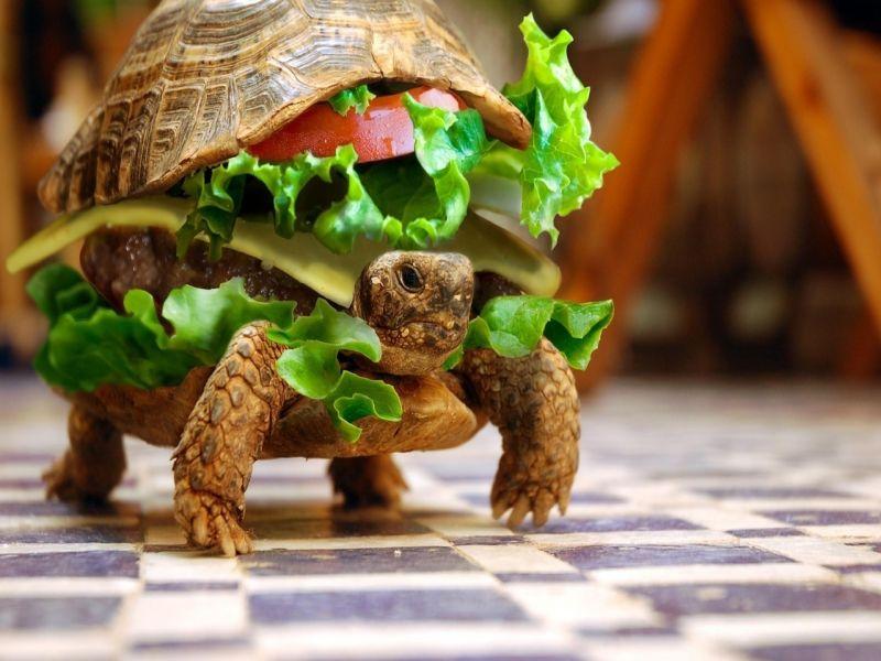 Пазл Собирать пазлы онлайн - Бургер-черепаха