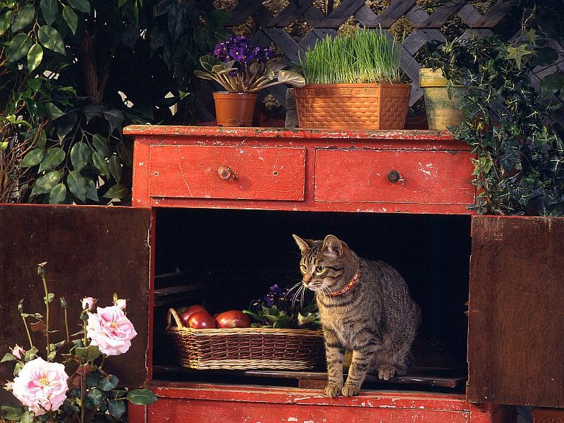 Пазл Собирать пазлы онлайн - Cat in Cabinet
