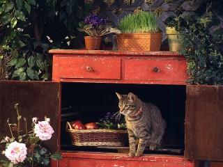Собирать пазл Cat in Cabinet онлайн