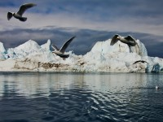 Собирать пазл Чайки над льдами онлайн