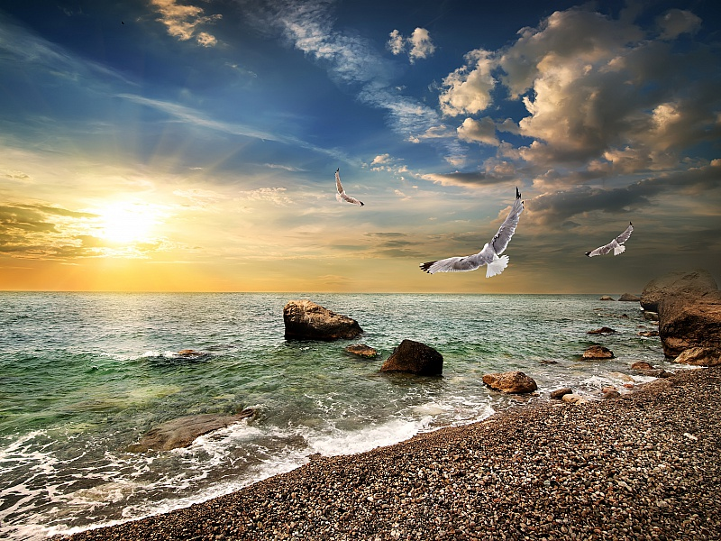 Пазл Собирать пазлы онлайн - Чайки над морем