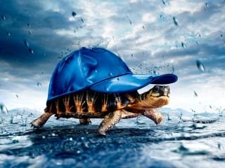 Собирать пазл Черепаха с кепкой онлайн
