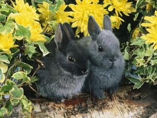 Собирать пазл Черные кролики онлайн