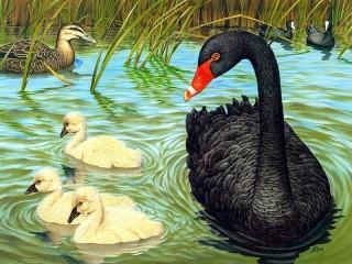 Собирать пазл Черный лебедь онлайн