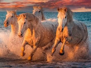 Собирать пазл Четыре коня онлайн