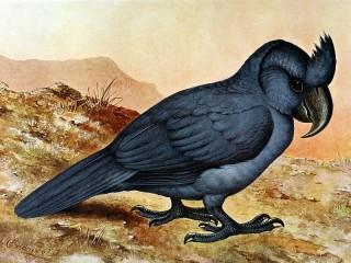 Собирать пазл Чубатый попугай онлайн