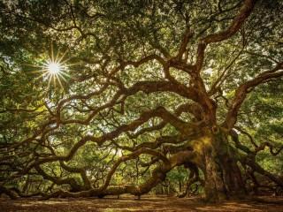 Собирать пазл Чудо-дерево онлайн