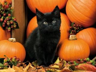 Собирать пазл Чёрный котёнок онлайн