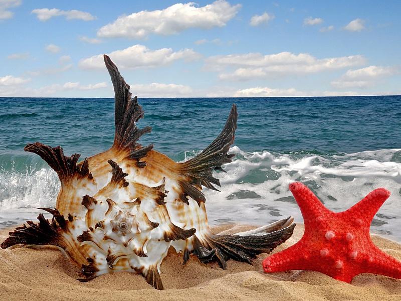 Пазл Собирать пазлы онлайн - Дары моря