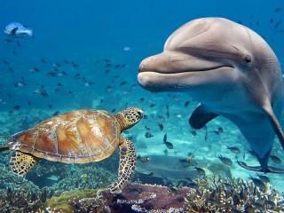 Собирать пазл Дельфин и черепаха онлайн